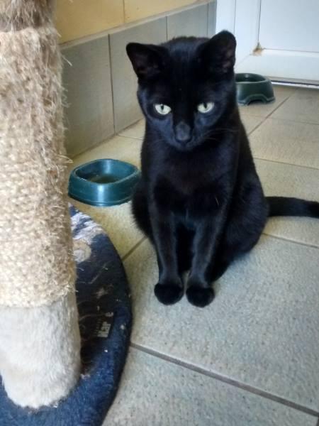 black cat. © Nick Bailey