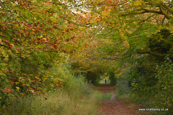 Roman Road Wandlebury Cambridge. © Nick Bailey
