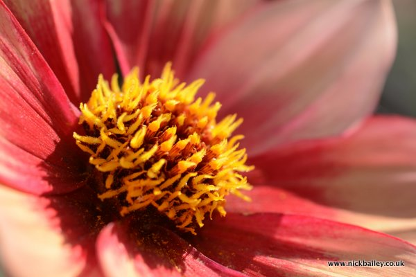 British Garden Macro. © Nick Bailey