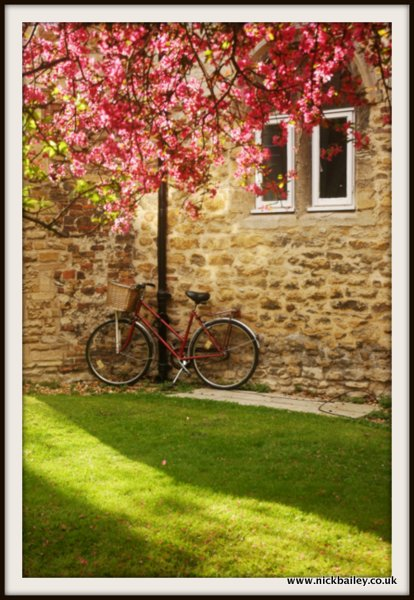 cherry tree, bicycle, Chesterton Tower. © Nick Bailey